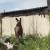 Лосёнок забрёл в Кемерово
